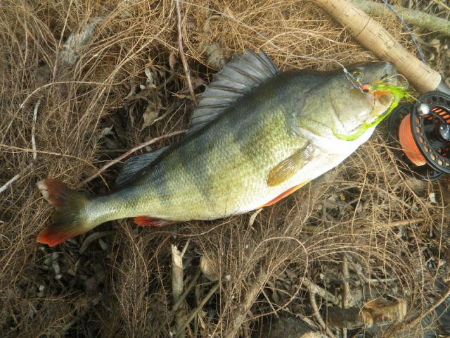 bass251013